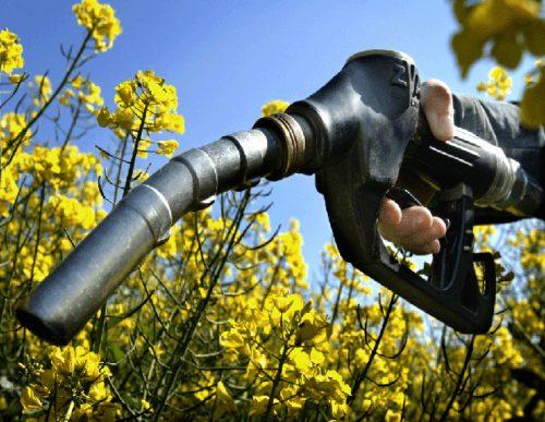 Biodiesel. Anunciaron reapertura del mercado europeo