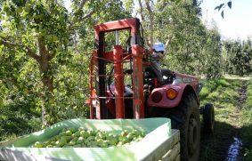 Exportación de frutas sigue cayendo