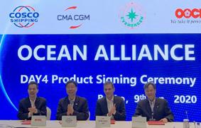 Ocean Alliance Day 4