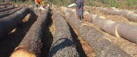 Industria Forestal, finalizó el primer seminario internacional