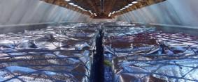 Mercaderías perecederas con mayor crecimiento en carga aérea