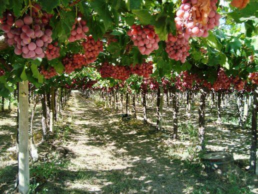 Sector vitivinícola, balance 2017. Menos exportación y más importación