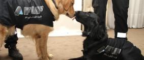 Los depósitos fiscales deberán contar con canes entrenados por la AFIP