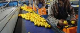 Limón argentino, China abre su mercado